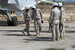 Иностранные средства массовой информации неоднократно писали, что основными целями бомбардировок российской военной авиации являются не формирования «Исламского государства»