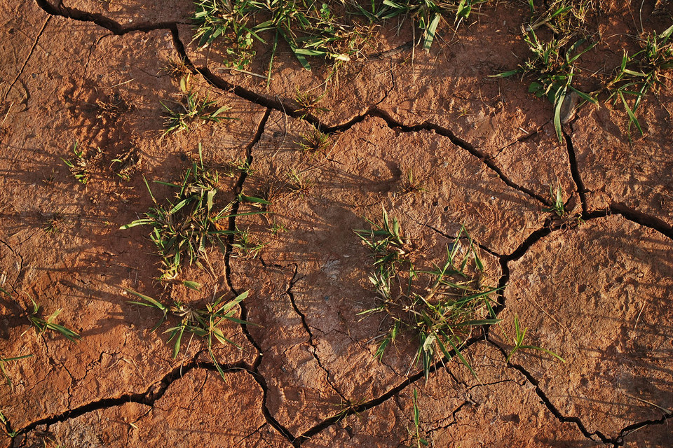 Основные регионы, которых коснулась засуха  - юг и центральная Россия