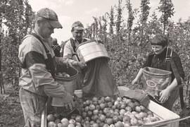 Несмотря на российское эмбарго, польский экспорт сельхозпродуктов рос и в 2014 г., и в первой половине 2015 г.