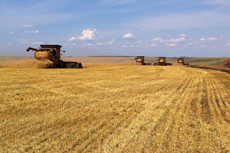 Агрохолдинг Trigon Agri уходит из России после семи лет работы здесь
