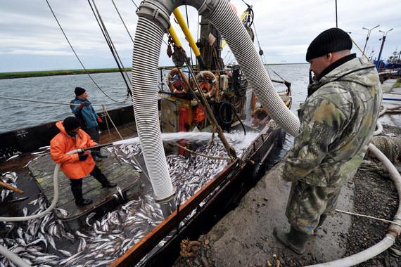 Кто контролирует добычу рыбы в России
