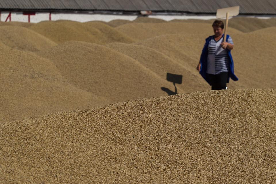 В 2015 г. Россия, вероятно, соберет третий урожай в истории – 101–102 млн т, согласно прогнозу Минсельхоза
