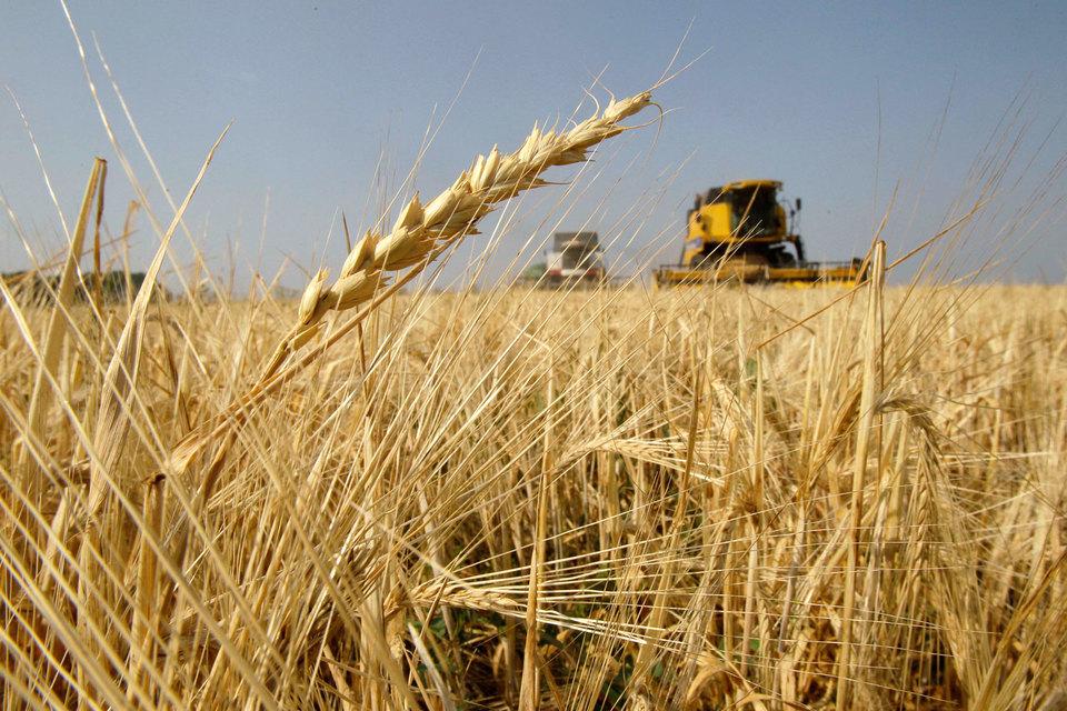 Сельскохозяйственная продукция стала основной статьей украинского экспорта
