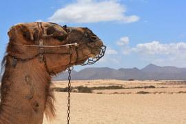 Почти все российские туристы вывезены из Египта
