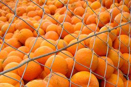 В список попали турецкие мандарины и апельсины