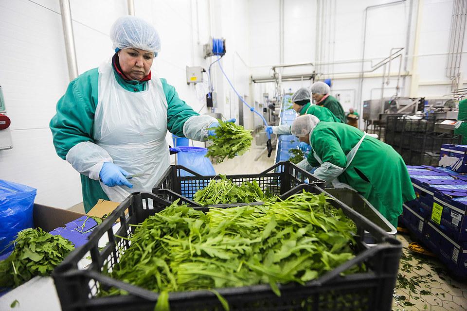 Aгрохолдинг оставит только наиболее благонадежных поставщиков