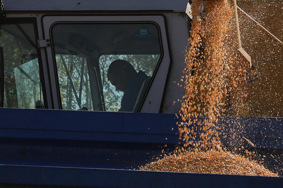 Зерно подешевело со страху