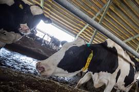 АФК «Система» расширяет сельскохозяйственный бизнес