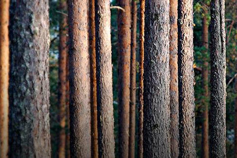 Metsa Group (ранее – Metsaliitto Group) – переработчик древесины