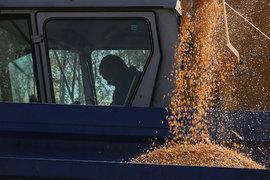 Минсельхоз назвал первый прогноз по урожаю зерна будущего года – 104 млн т. Предварительные оценки участников рынка менее оптимистичны – до 99 млн т