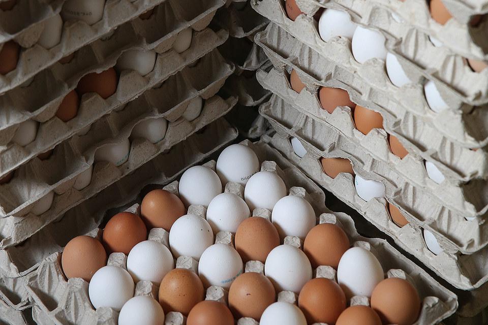 Кондопожский комбинат подал иск о банкротстве птицефабрики «Синявинская»