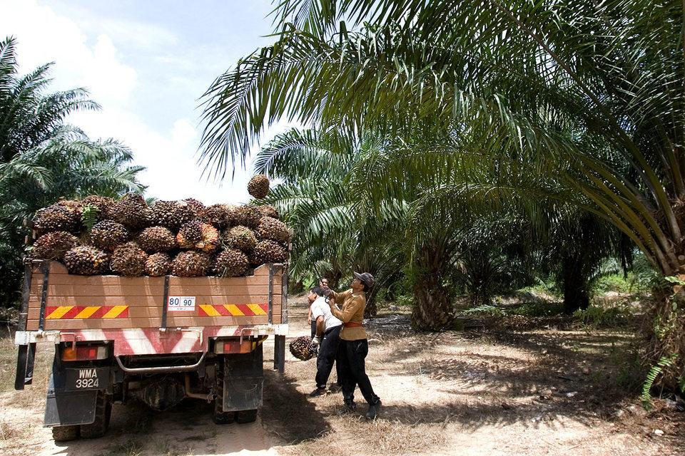 Цены на пальмовое масло достигли практически двухлетнего максимума