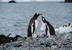 В ходе первого в истории визита в Антарктиду патриарх Московский и всея Руси посетил также колонию пингвинов на острове Ардли