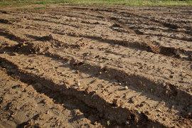 Подмосковные власти перешли от угрозы изымать не используемые собственниками сельхозземли к делу