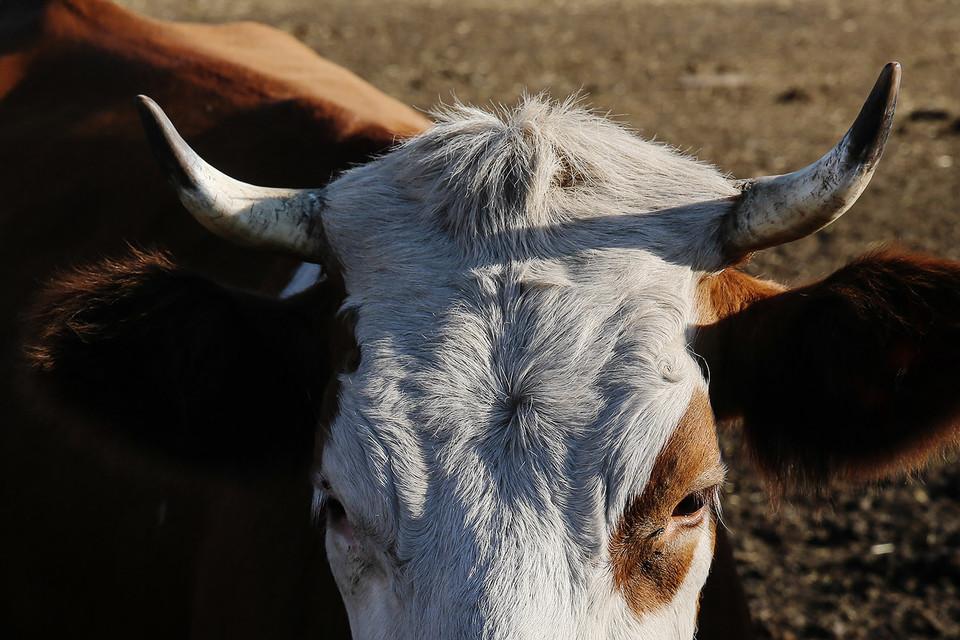 Инвесторы против бесконтрольного использования антибиотиков в сельском хозяйстве