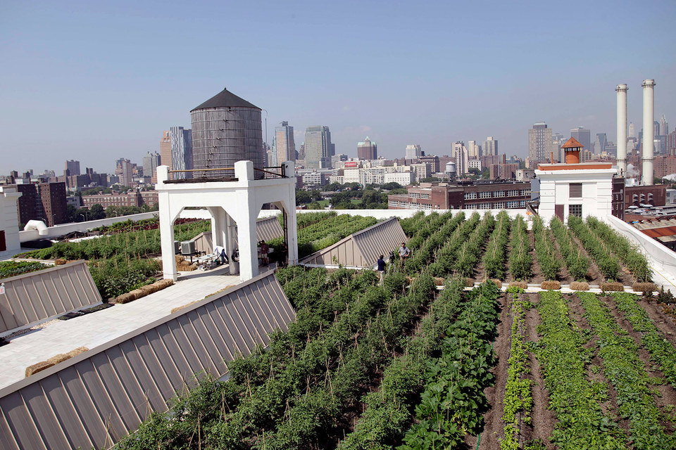 Число стартапов, выращивающих овощи на крышах зданий или в помещениях заброшенных заводов, растет