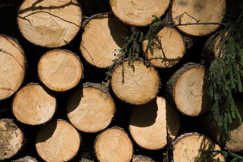 Российские ведомства начнут тестирование RFID-меток для маркировки ценной древесины