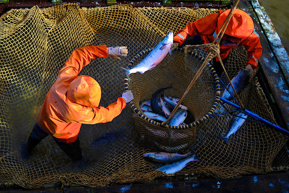 Производители рыбной продукции осознали: лосось россиянам теперь не по карману