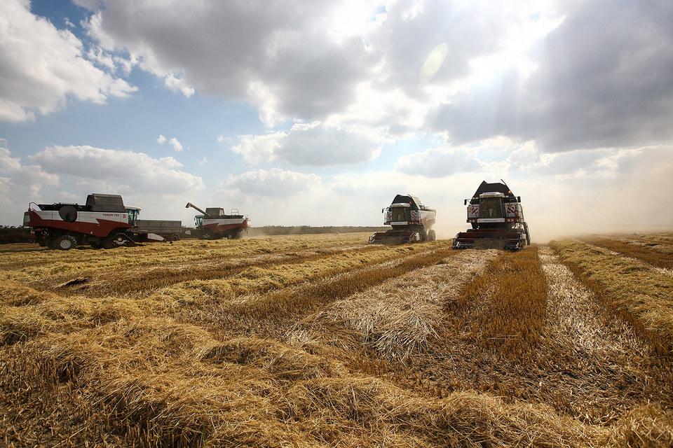 Семья министра собирает рис