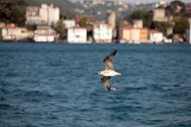 Чартерные полеты в Турцию скоро разрешат, но перевозчикам сложно будет найти самолеты – они задействованы на других направлениях