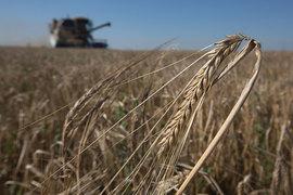 Минсельхоз повысил прогноз по сбору зерна до рекордных 110 млн т.