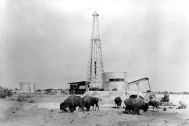 Техас - главный нефтяной штат Америки. Первую нефть здесь обнаружили еще испанцы в XVI веке, но промышленная добыча углеводородов началась в штате только в XIX веке. Настоящий «нефтяной бум» в Техасе произошел в первой половине XX века. Во многом именно благодаря Техасу к 1970 г. США добывали более 533 млн т нефти в год - в 2,5 раза больше, чем Саудовская Аравия. К концу века месторождения Техаса начали истощаться, из-за чего добыча в штате к началу нового века уменьшилась в 3 раза по сравнению с рекордными показателями.