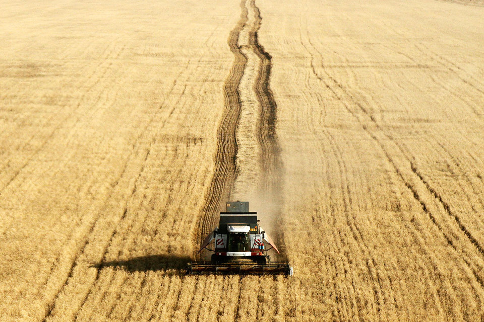 Из-за избытка зерна цены на него достигли минимума и продолжают падать