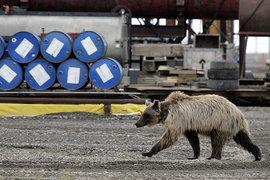 После роста почти на 100% в первом полугодии цены на нефть упали более чем на 20%, ознаменовав переход к медвежьему тренду