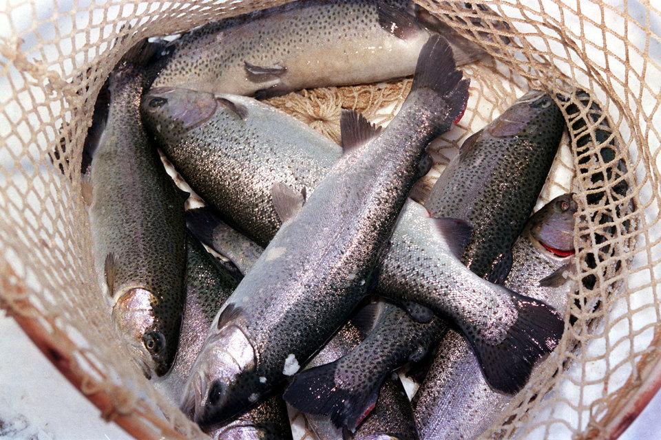 «Русскую рыбную компанию» купили ее гендиректор и фонд экс-губернатора Приморья
