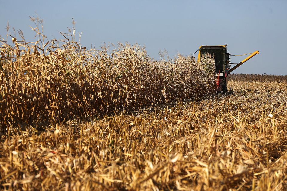 Шведский агрохолдинг Black Earth Farming решил продать часть земель в России