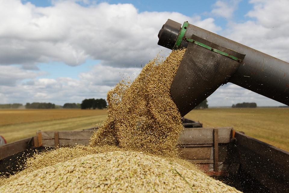 В России ожидается высокий урожай