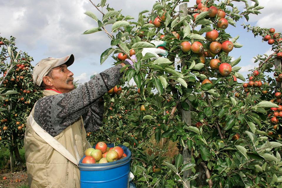 Садоводы ищут новые рынки сбыта, но спрос там пока невысок