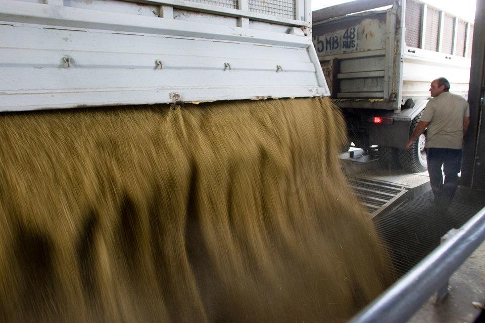 Экспортная пошлина на пшеницу будет обнулена на ближайшие два года