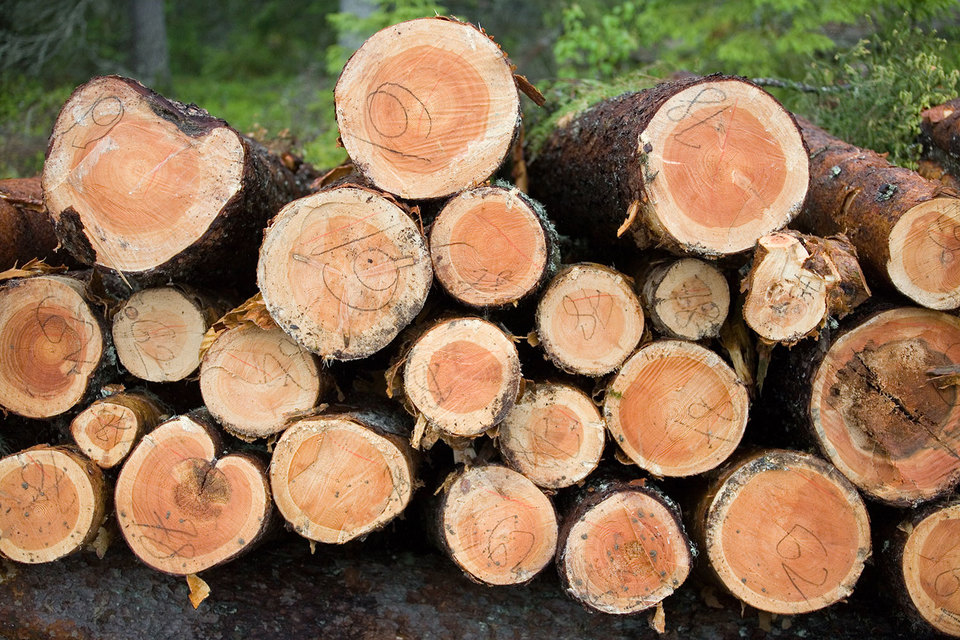 На Дальнем Востоке планируется создать лесопромышленный кластер