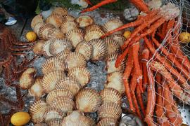 Инвестиции в строительство рыбного флота к 2030 г. будут насчитывать 400 млрд руб.