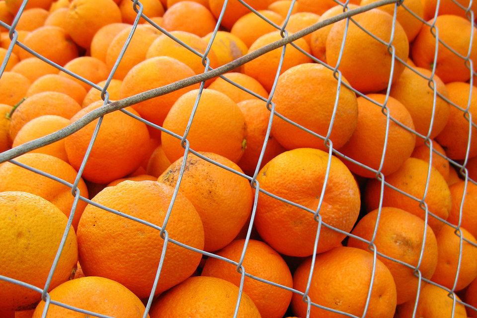 Россия может ввести временные ограничения на ввоз продукции высокого фитосанитарного риска из Египта