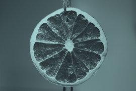 В египетских апельсинах Россельхознадзор обнаружил средиземноморскую плодовую муху