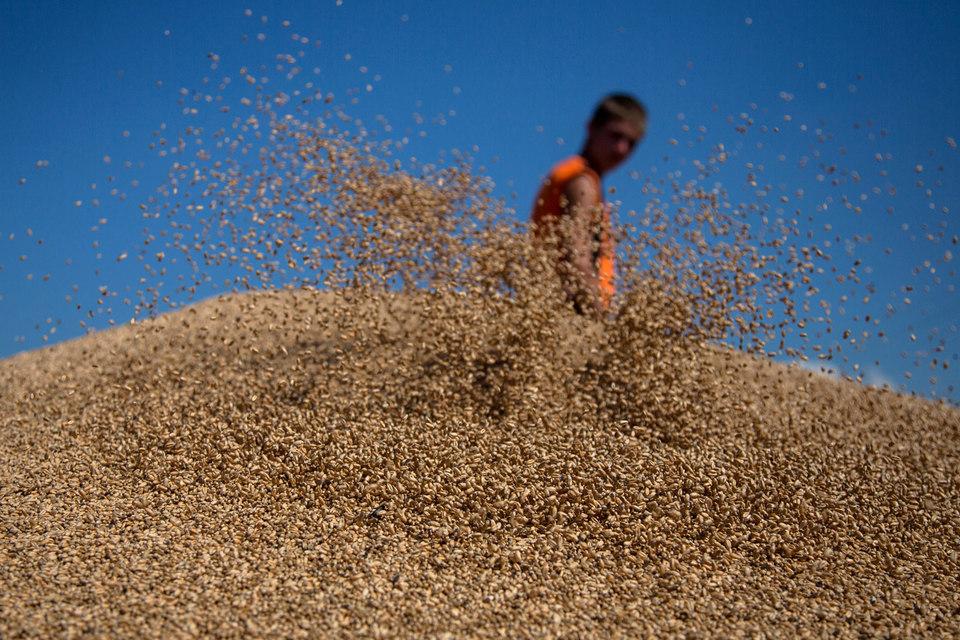 Укрепление рубля почти обнулило доходы экспортеров зерна