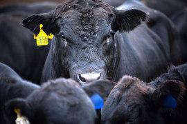Сельхозпроизводителям теперь придется побороться за поддержку государства