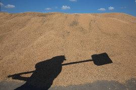 Минсельхоз понизил прогноз экспорта зерна