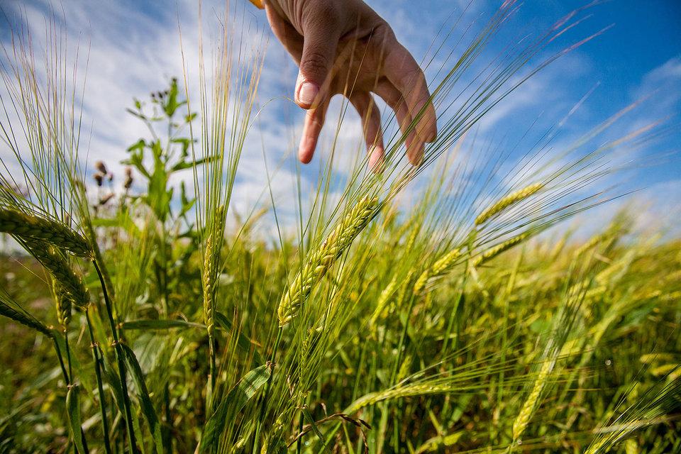 Несмотря на инвестиции и развитие агроотрасли, кадровый вопрос остается острым
