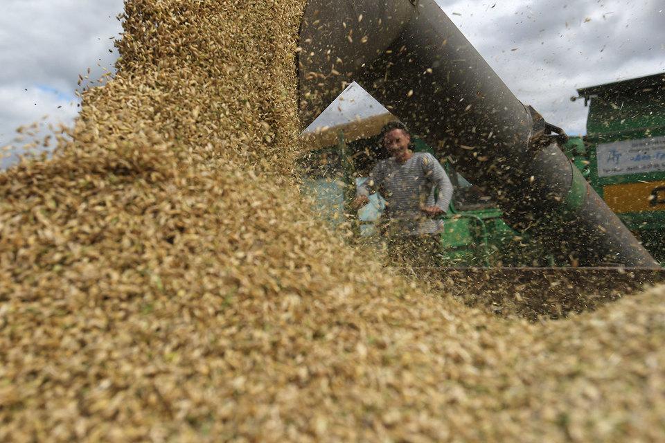 Минсельхоз готов продавать зерно из госфонда Сибири и Дальнему Востоку