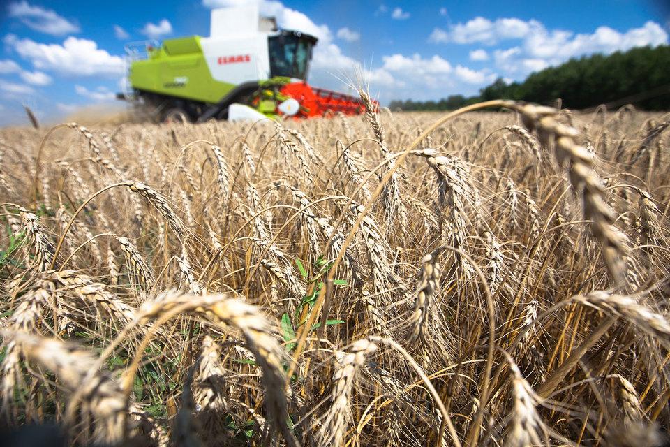 Пошлина на экспорт пшеницы была введена с 1 февраля 2015 г., чтобы избежать бесконтрольного вывоза зерна в условиях девальвации российской валюты