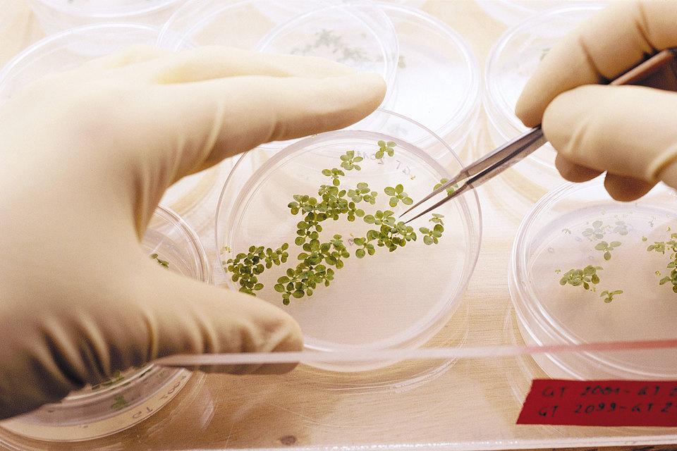 Syngenta - швейцарский производитель средств защиты растений и генетического материала