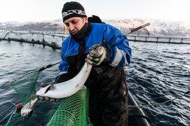 «Русская аквакультура» – крупнейший в России производитель озерной форели и атлантического лосося