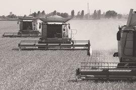Производство все больше концентрируется в южных регионах ивкрупных агрохолдингах