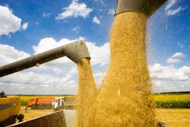 В 2016 г. Россия собрала рекордный урожай зерна за всю историю