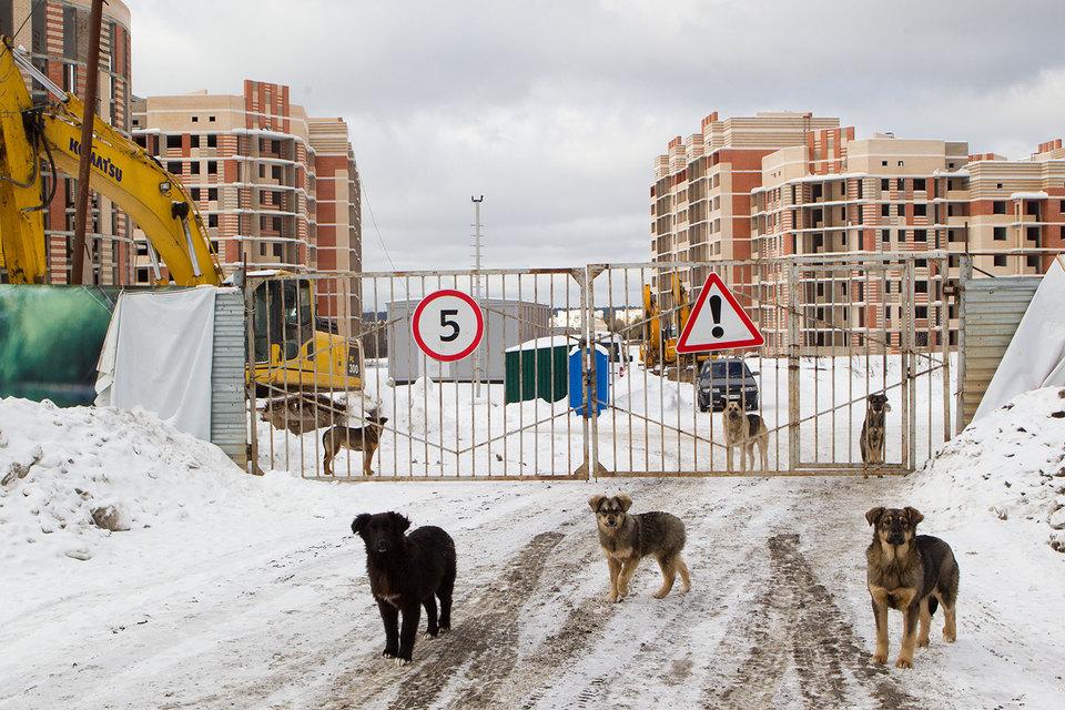 Законопроект определяет ответственность владельцев, если животные нанесут вред здоровью или имуществу