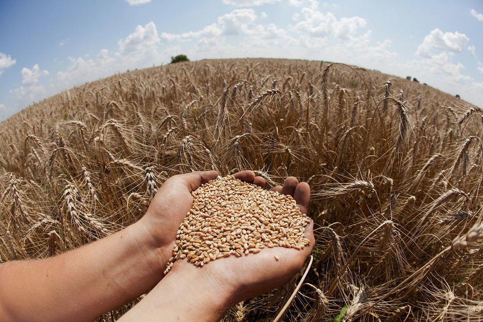 Россия собрала рекордные 120,7 млн т зерна, но продать его никак не удается