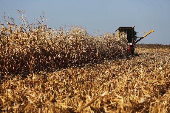 Агрокомплекс семьи министра сельского хозяйства стал четвертым среди владельцев сельхозугодий